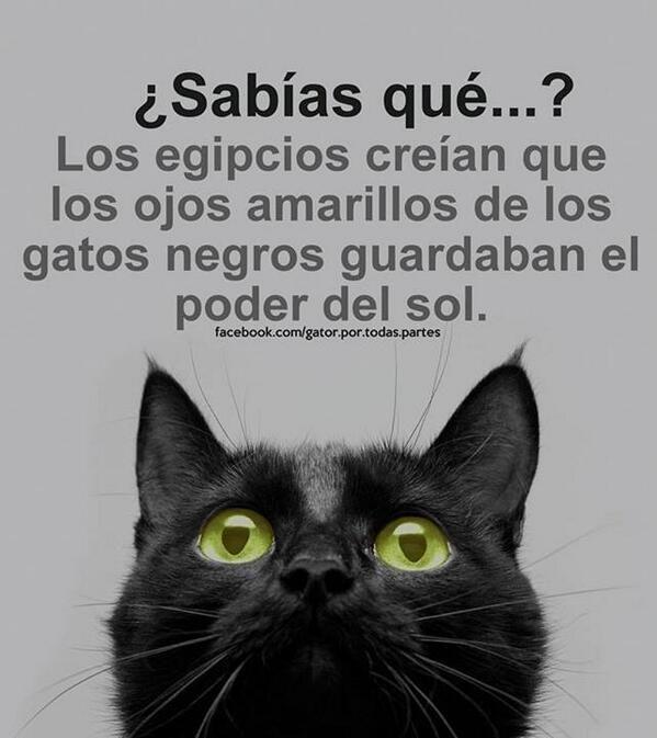 ¿Sabías qué...? Los egipcios creían que los ojos amarillos de los gatos negros guardaban el poder del sol. @madrid_clint