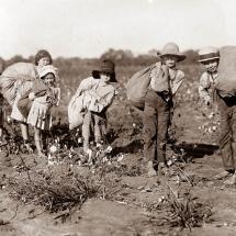 Children Picking Cotton, Alabama c. 1920's