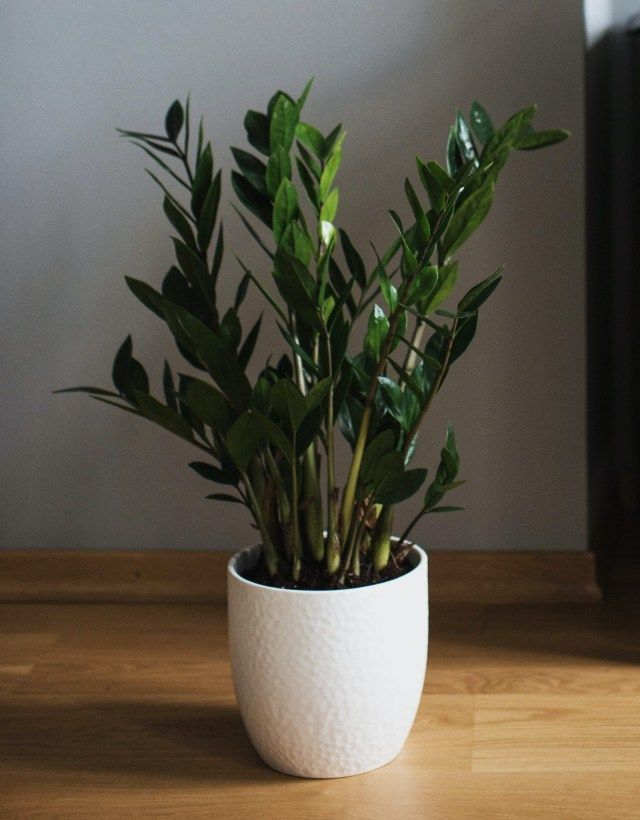 Top Plants That Actually Grow In Bathrooms Without Windows In 2020 Windowless Bathroom Bathroom Without Windows Room With Plants