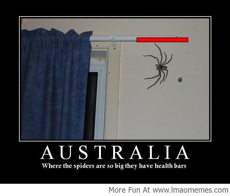 Meanwhile in Australia! - http://lmaomemes.com/meanwhile-in-australia-2/