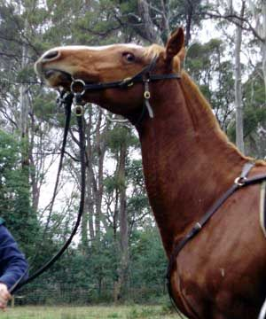 Dealing with Horse Behavior Issues