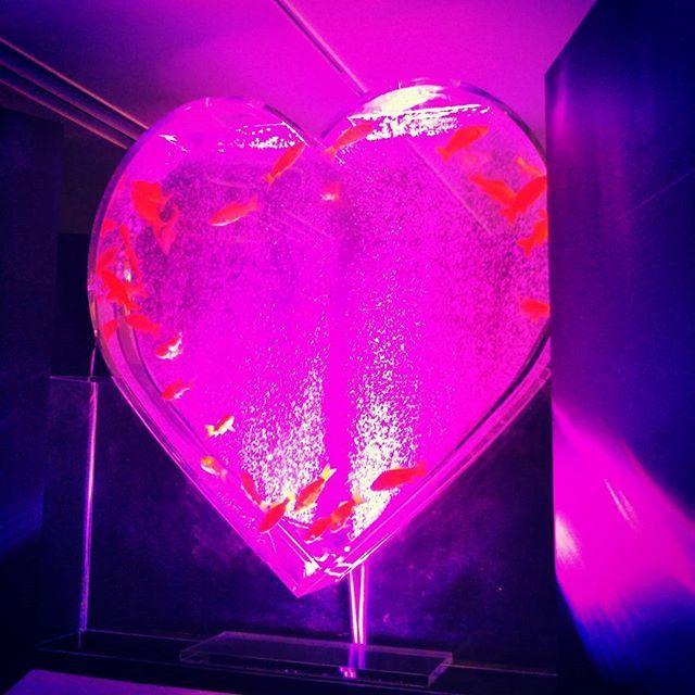 【sawakonn】さんのInstagramをピンしています。 《#aquarium #goldfish#beautiful #goldfishes #heart #instagood #instafhoto #happyholiday #happy#アクアリウム #金魚 #follow #followme》