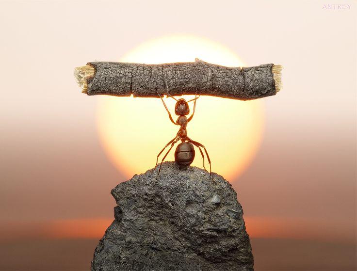 Ants at dawn