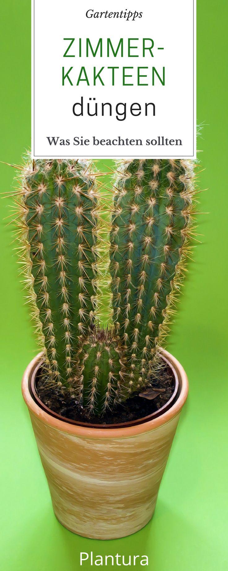 21 besten kaktus kakteen pflanzen bilder auf pinterest. Black Bedroom Furniture Sets. Home Design Ideas