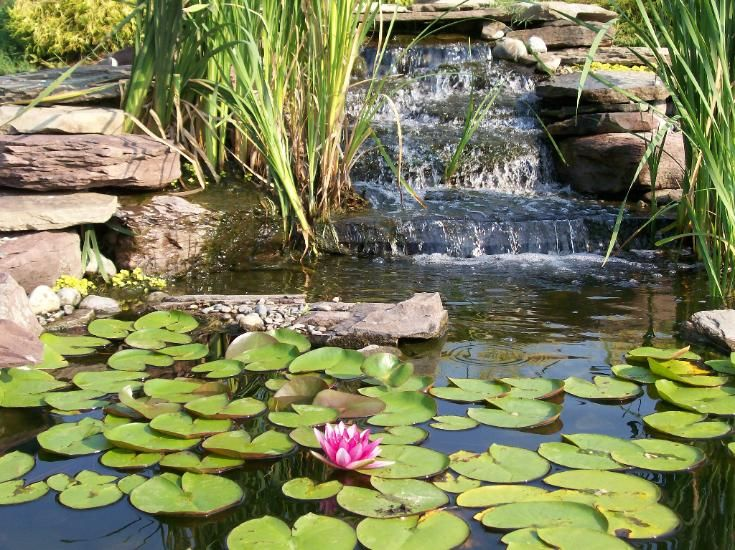 Google Image Result for http://www.scenicponds.com/sitebuilder/images/pond_lily_waterfall-735x550.jpg