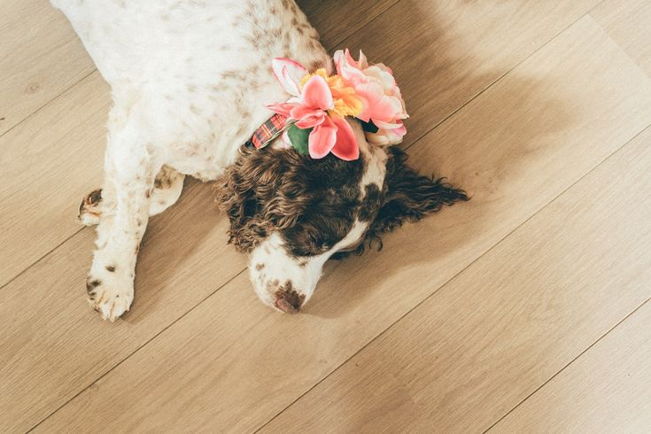 Pet dog wears pretty floral corsage. Photography Craig Goode of Mr & Mrs Photography