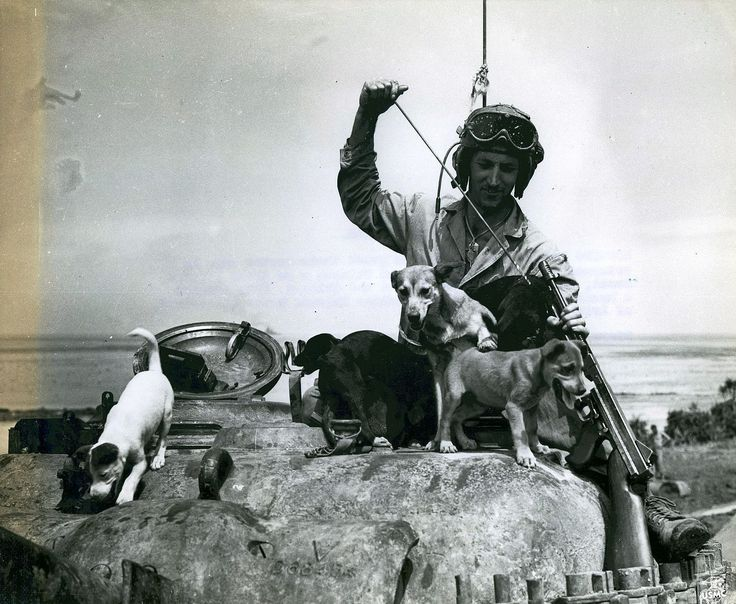 File:Private Bruce Rutherford and Puppies, Okinawa, 1 June 1945 (6972498588).jpg