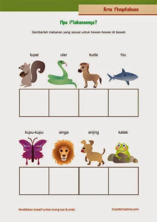 belajar anak kelas 1 SD, makanan hewan, berlatih menggambar