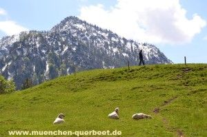 #Schafe #Berge ©Foto: Sofia Delgado