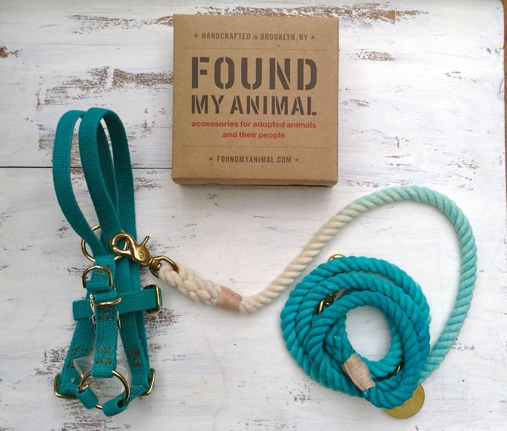 Teal Harness and Ombre lead by Found My Animal…my favorite leashes/collars for our dogs