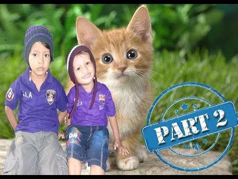 VLOG VICTOR SHAKA # EPISODE BERMAIN BERSAMA CAT Part 2