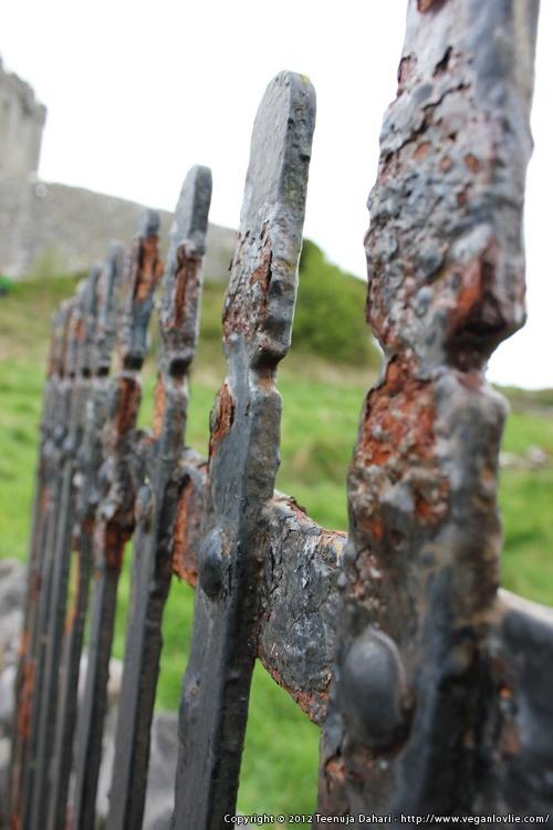 An iron gate. Photo taken on a tour to County Clare, Ireland