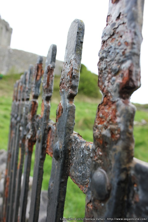 An iron gate. Photo taken on a tour to County Clare, Ireland