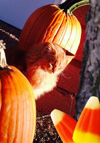 Have you signed up for our Halloween Pet Photo Program? |  Custom Apps for Veterinarians & the Veterinary Industry  ☎ Call Us at 1-877-282...