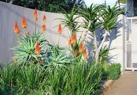 indigenous garden ideas - Google Search