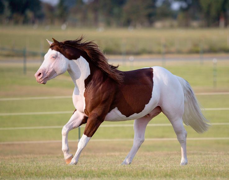 Foal Training Success Tips - NW Horse Source