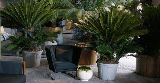 Vijf interieurtrends die momenteel het beeld bepalen, zijn:1. Een frisse start: Groen   Planten, heel veel planten. Grote, hoge planten op de vloer, maar ook hangend in bakken aan het plafond en in open kasten. Groen komt ook terug in stoffen en  wandbekleding en als groene gedachte in reccling en natuurlijke materialen.