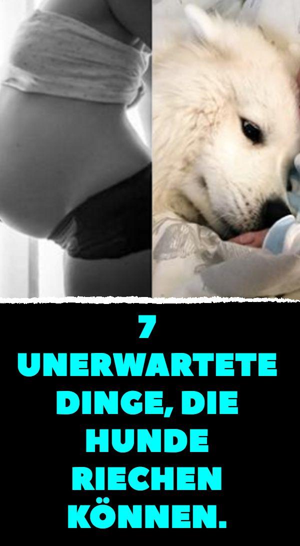 7 unerwartete Dinge, die Hunde riechen können.