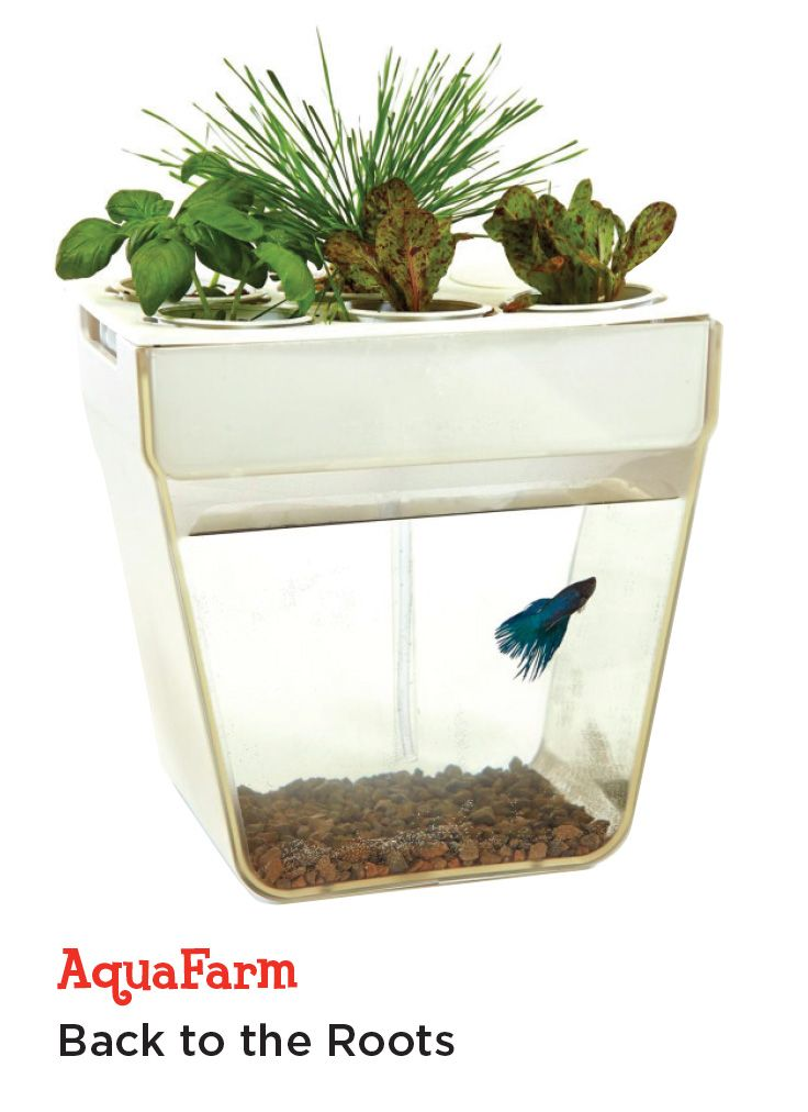 Perfect for pet lovers with a green thumb. This tank creates a symbiotic environment that grows plants on top while fish naturally fertilize from below.