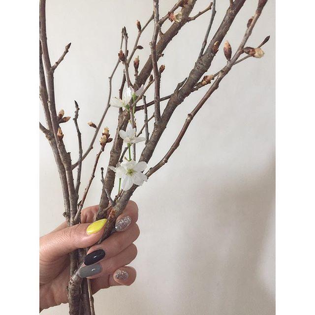 2017.1.13.fri. . new neil × cherry blossom . . . #ネイル #neil #ジェルネイル #gelnail #セルフネイル #桜 #早咲き桜 #外はみぞれ #今夜から雪が降るってさ