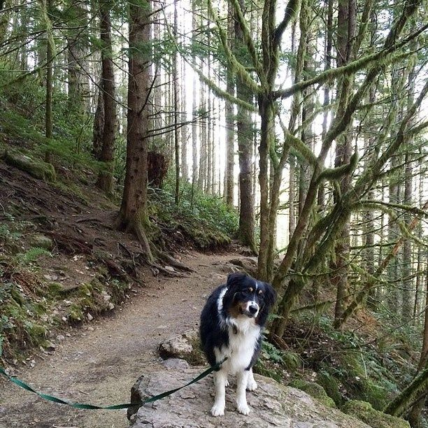 List of dog friendly places in San Francisco