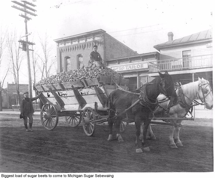 Bringing a load of sugar beets to Sebewaing (Sandusky District Library) #sebewaing #HuronCounty