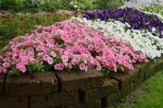 Presenza aiuole vialetto realizzazione bordure fai da - Aiuole giardino fai da te ...