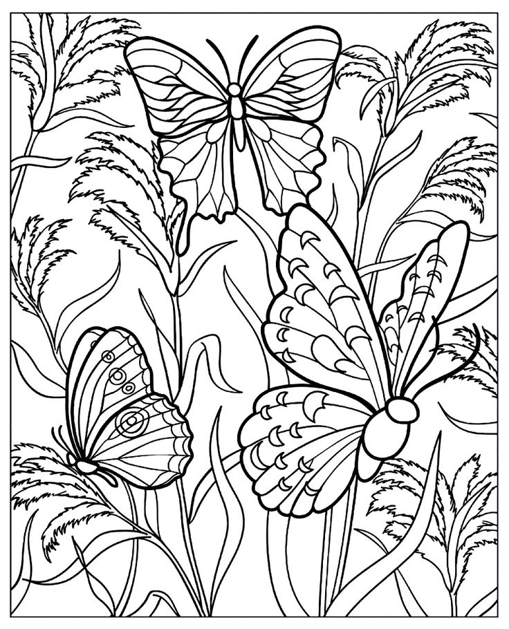 free coloring page coloring difficult butterflys several beautiful butterflies with wings full of details in a beautiful garden full of beautiful plants
