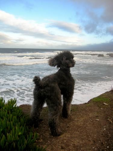 """""""Oscar watches out over his kingdom, Pescadero, CA"""""""