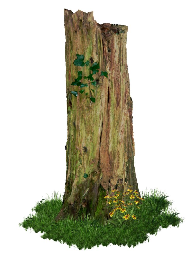Rotten old tree stump png by alz stock and art for What to do with tree logs