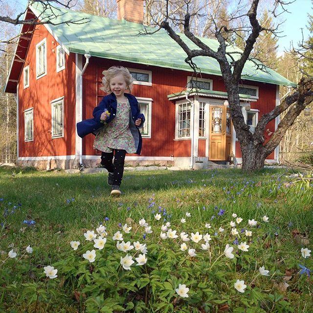Byggnadsvård i trädgården! Idag har jag ett föredrag med just den rubriken. Om hur man kan ta hand om en gammal trädgård med varsamma händer och hur man kan bygga växthus med återbruk. Föredraget sker på mässan