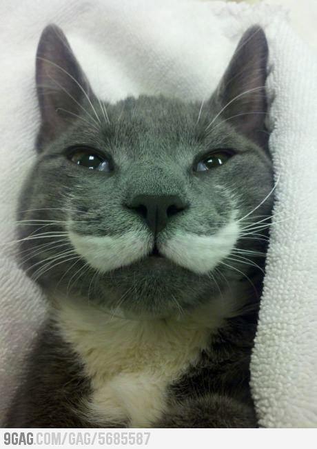 Mustache Cat   99Gag