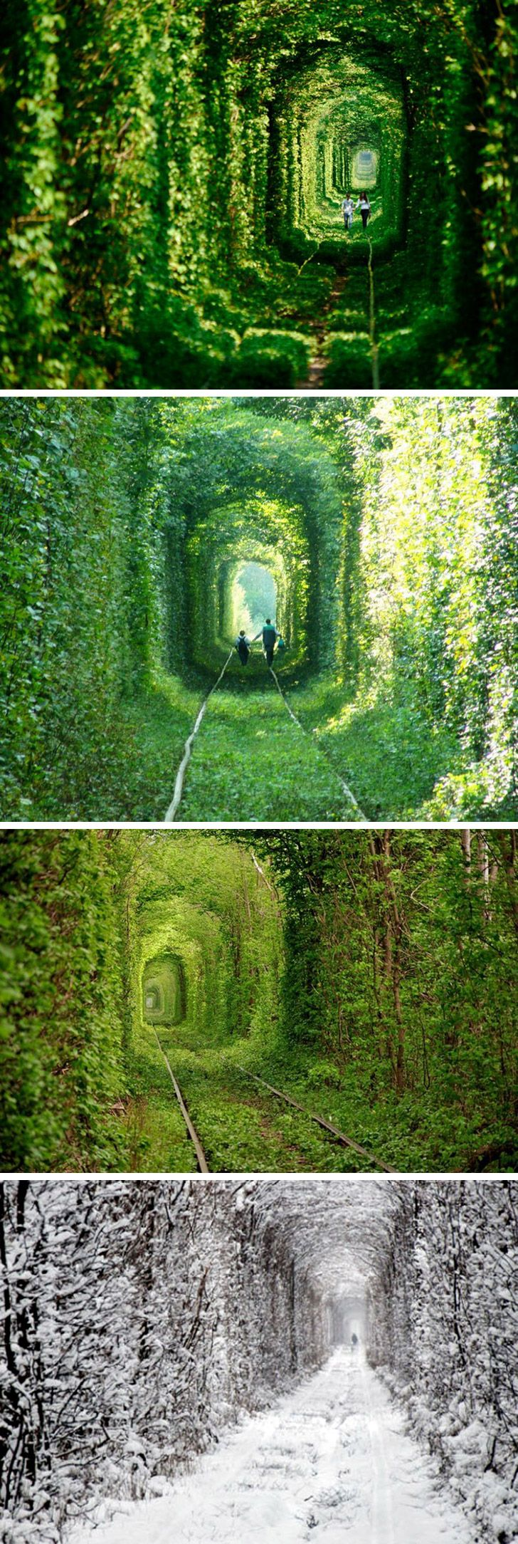 The Tunnel of Love in Kleven, Ukraine.