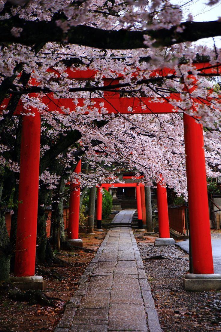 Ein kirschblühender Fleck gesäumt von leckeren Torii. Ein Frühling Takenaka Inari-Schrein – #cherryblossom #ein #Fleck #Frühling #gesäumt #InariSchrein #kirschblühender #leckeren #Takenaka #Torii #von