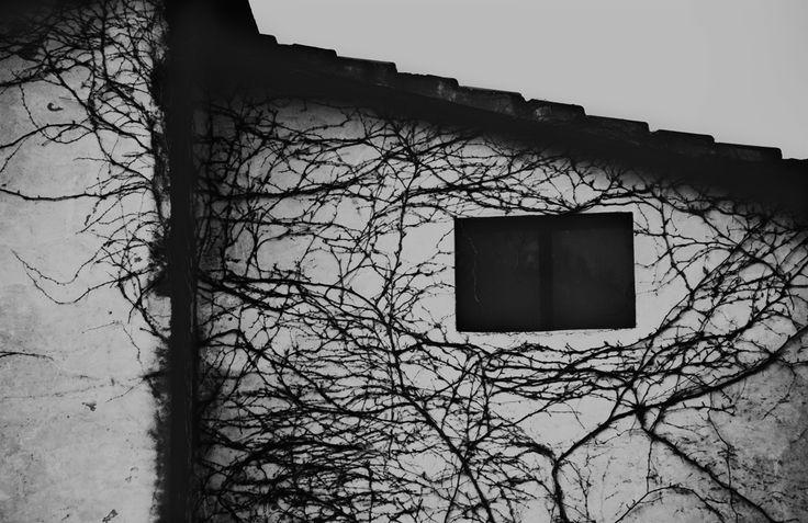 Un volto appare dietro la finestra, aggiungendo un'anima a quel corpo malato...