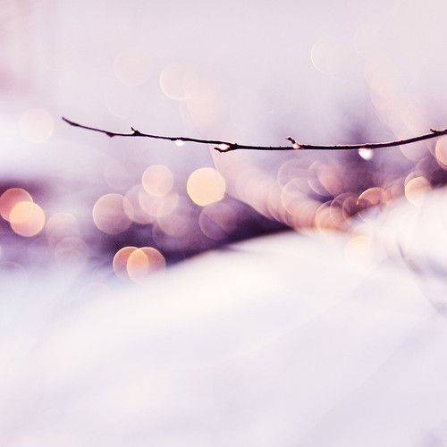 branche: Winter Snow, Learning Photography, Dreams Catcher, Dreamy Eye, Beautiful Beaches, Winterbeauti Beaches, Christmas Gifts, Pretty Bokeh, Photography Ideas