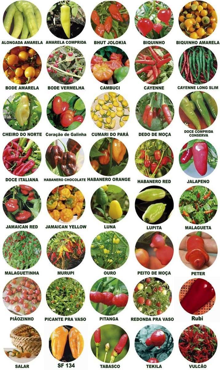 tipos de pimentas usadas no brasil - Pesquisa Google