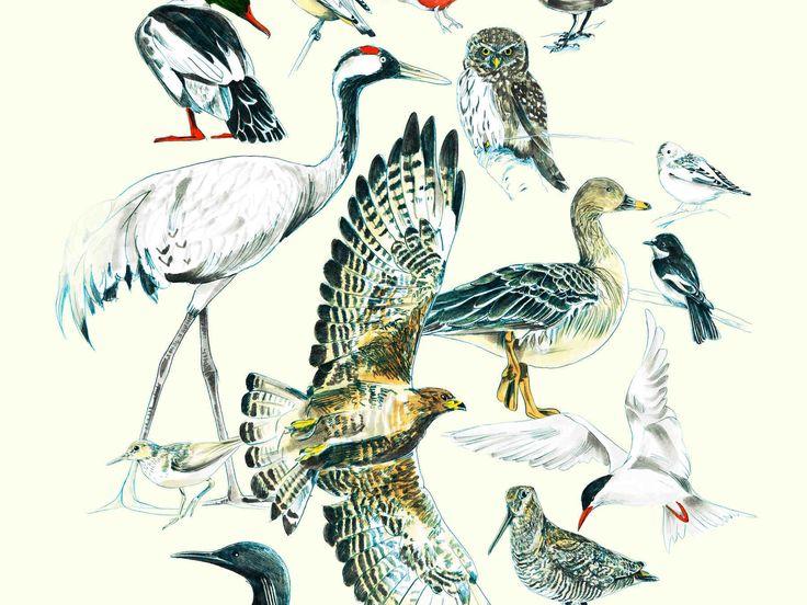 Lintujen katselu Suomen luonnossa on rentouttavaa puuhaa. Yhteishyvän lintukalenteri vinkkaa, mistä tunnistat eri linnut ja missä linnut liikkuvat vuoden...