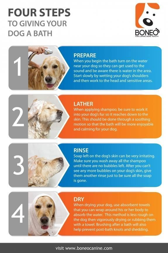 Infograph About How To Give Your Dog The Perfect Bath