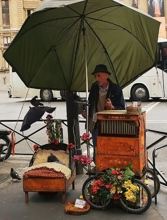 Paris Organ grinder ... love the cat's bed