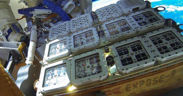 كائنات حية تنجو على سطح محطة الفضاء الدولية Space Station