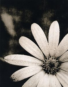 lithprint.com - adventures in lith printing & alternative process photography [final osteospermum lith print]