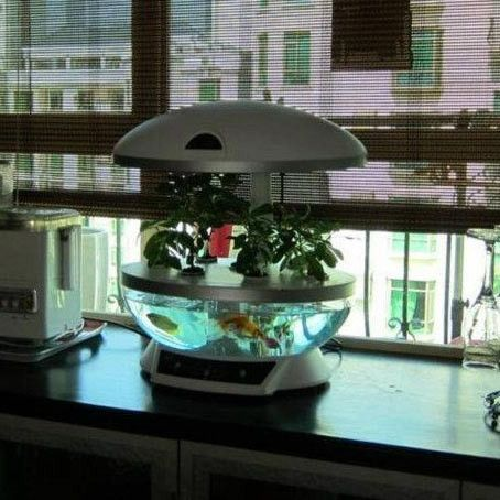 9 best indoor aquaponics images on pinterest aquaponics for Hydroponic fish tank