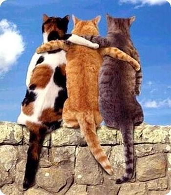 meilleurs amis chats