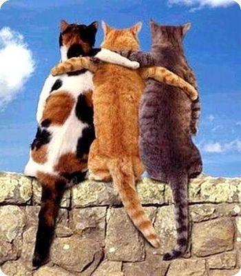 meilleurs amis chats
