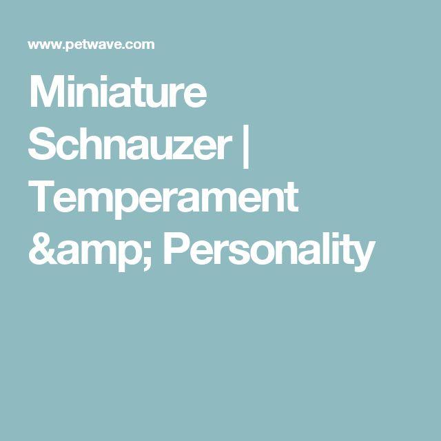 Miniature Schnauzer | Temperament & Personality