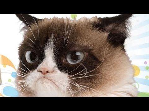 Happy 2nd Birthday (April 4, 2014), Grumpy Cat! - video on YouTube- Grumpy Cat interviewed by Wall Street Journal #Tard #GrumpyCat #TardarSauce