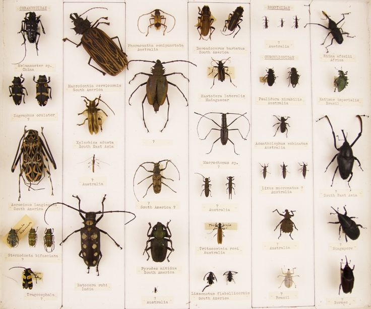 Coleoptera Collection – GMMG