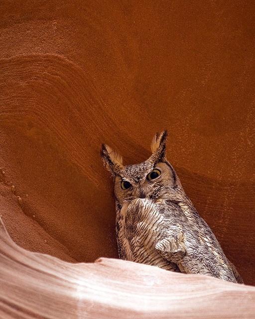 Antelope Canyon Owl