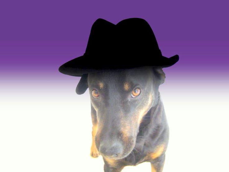 My dog Sasha